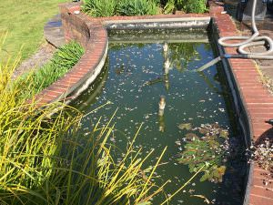 Pond Clean Project 5