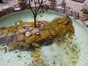 Pond Clean Project 1
