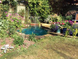 Pond Clean Project 4